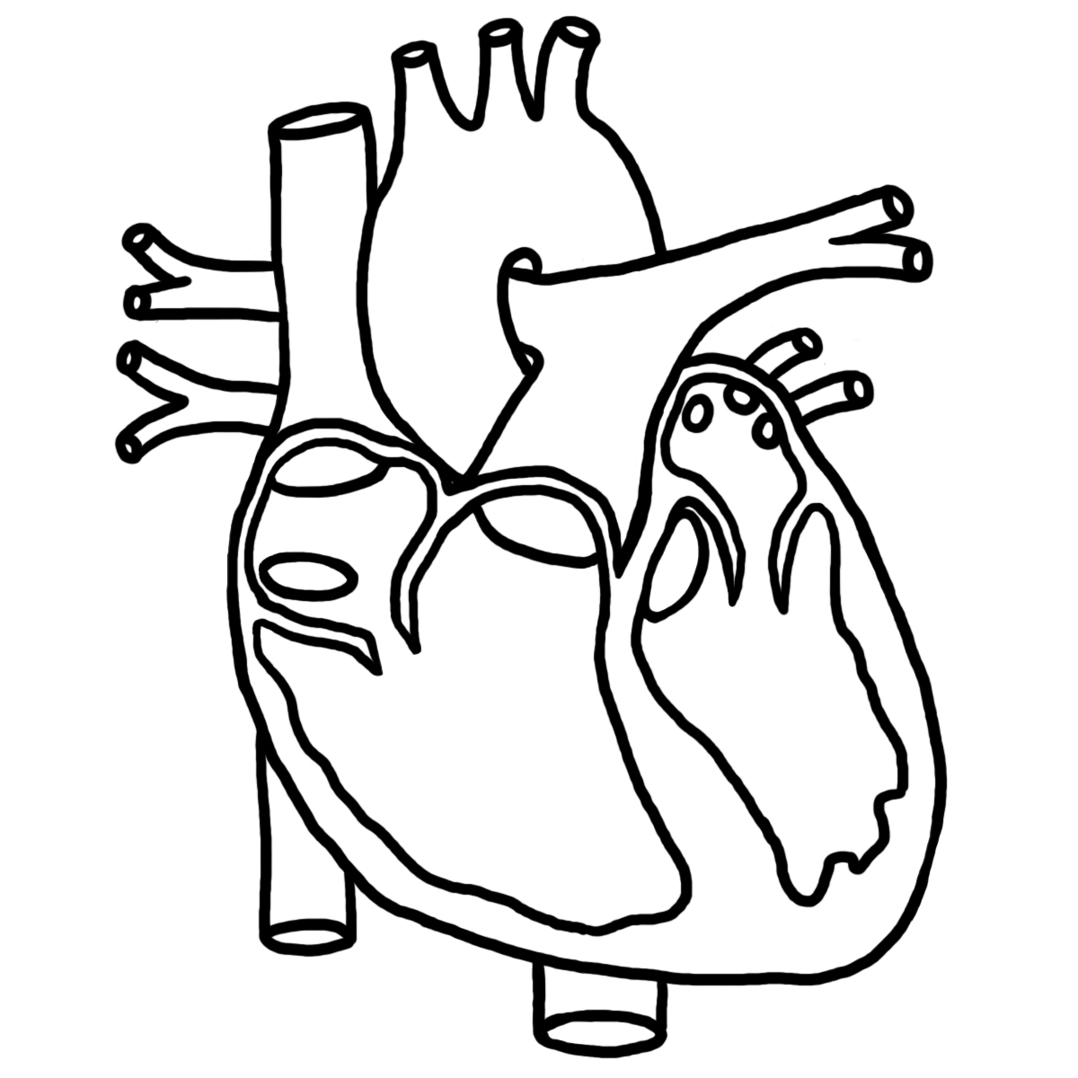 Heart Anatomy Drawing At Getdrawings