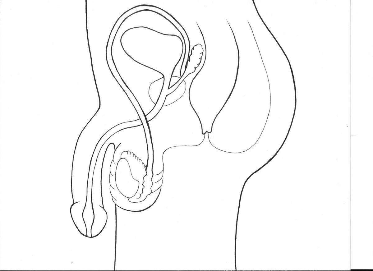 Human Ear Drawing At Getdrawings