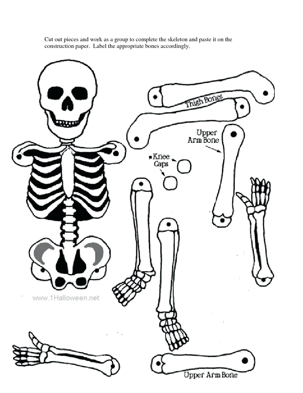 Human Skeletal System Drawing At Getdrawings