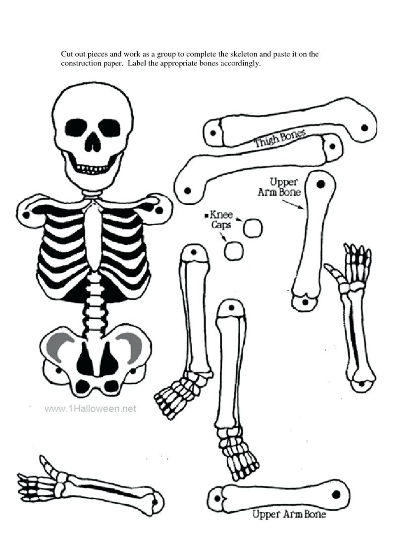human skeletal system drawing at getdrawings  free download