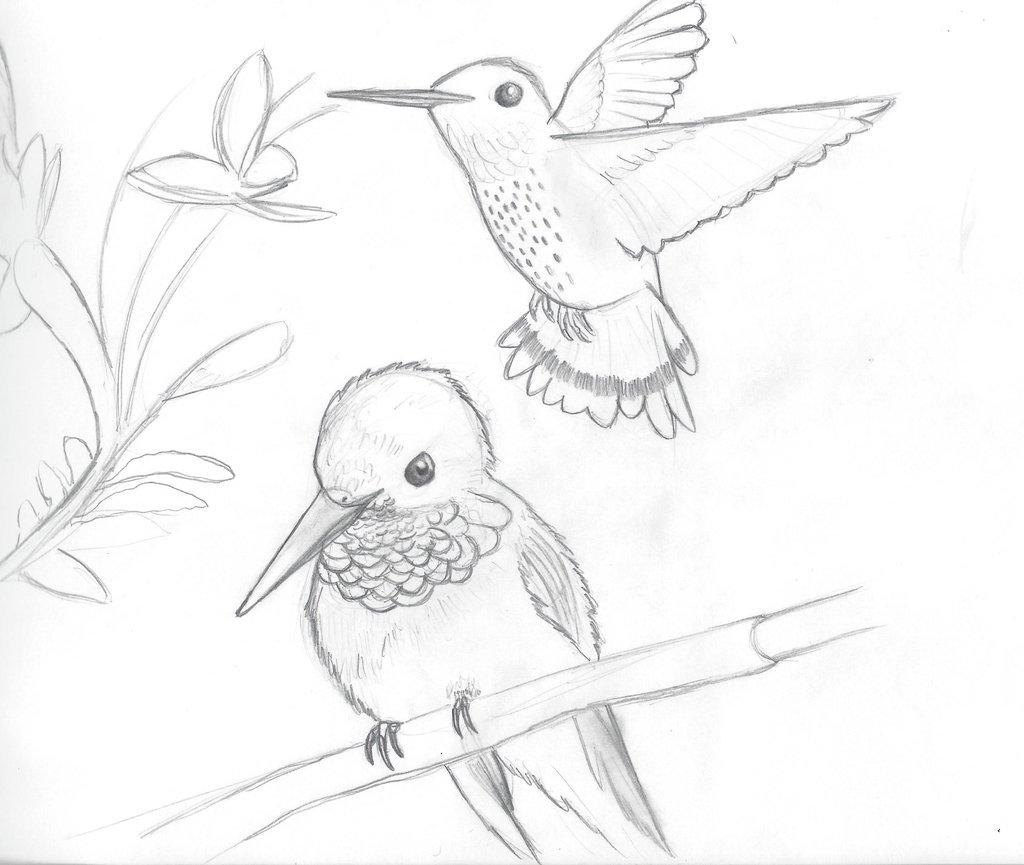Humming Bird Drawing At Getdrawings