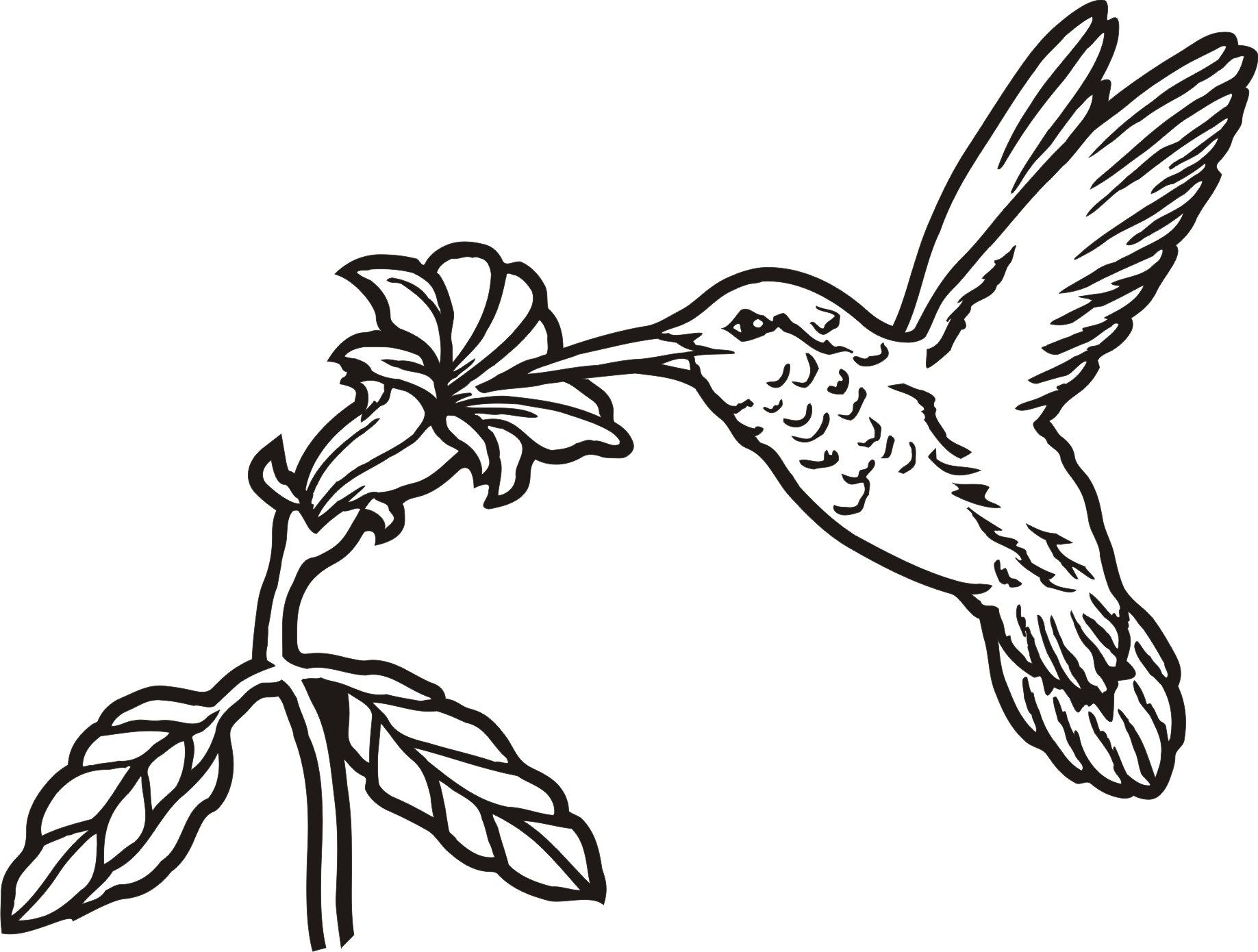 Hummingbird And Flower Drawing At Getdrawings