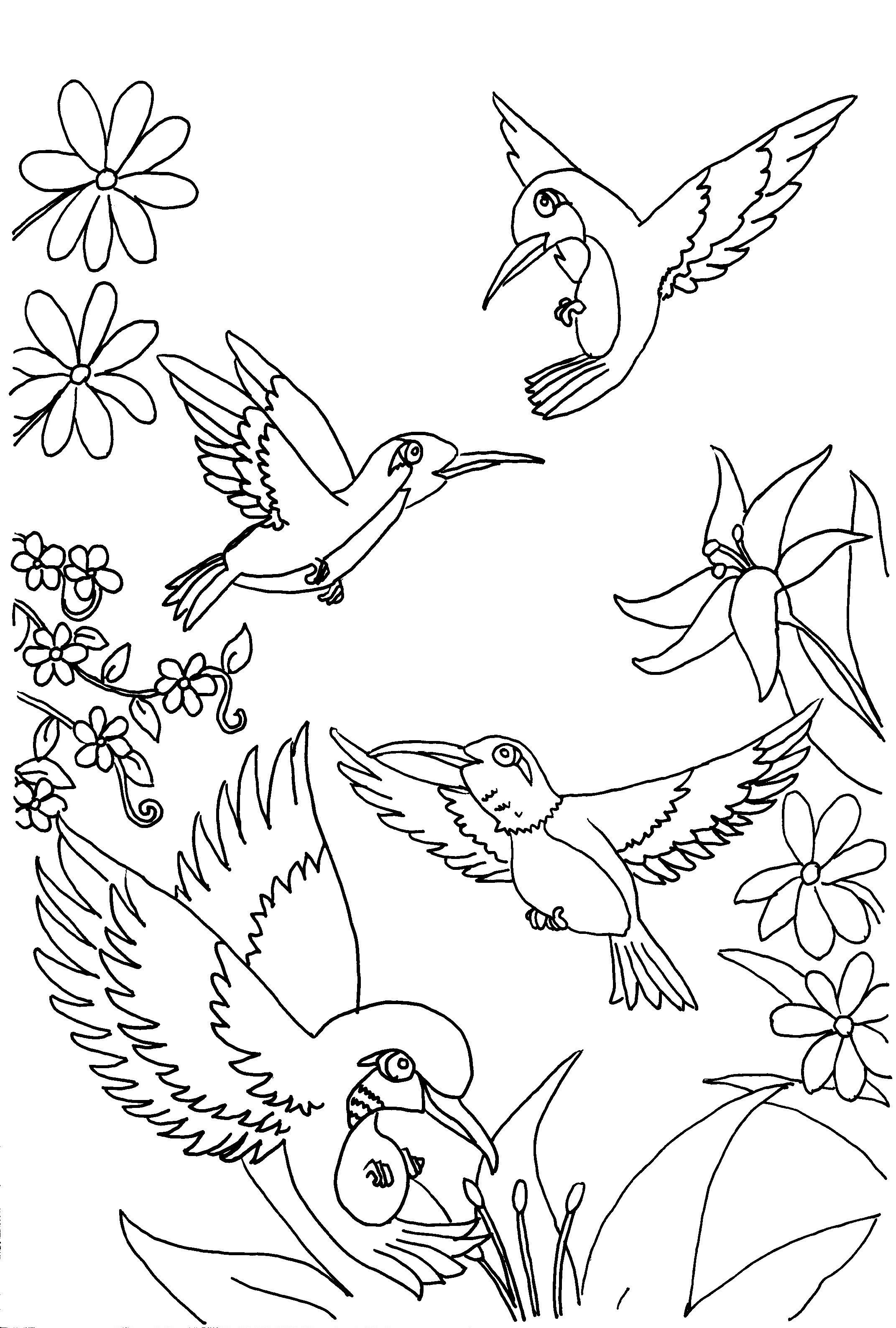 Hummingbird Drawing Free At Getdrawings