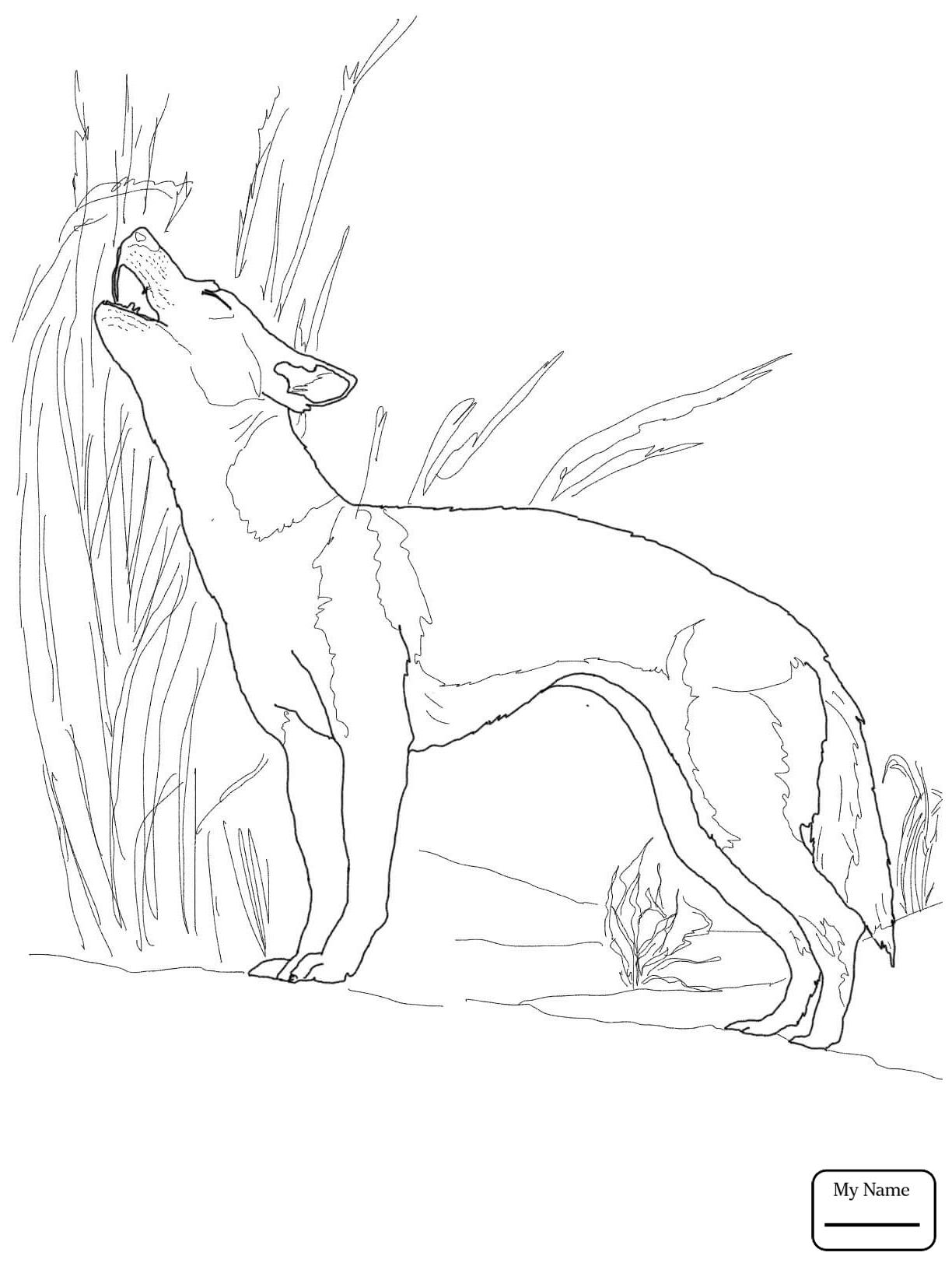 Hunting Dog Drawing At Getdrawings