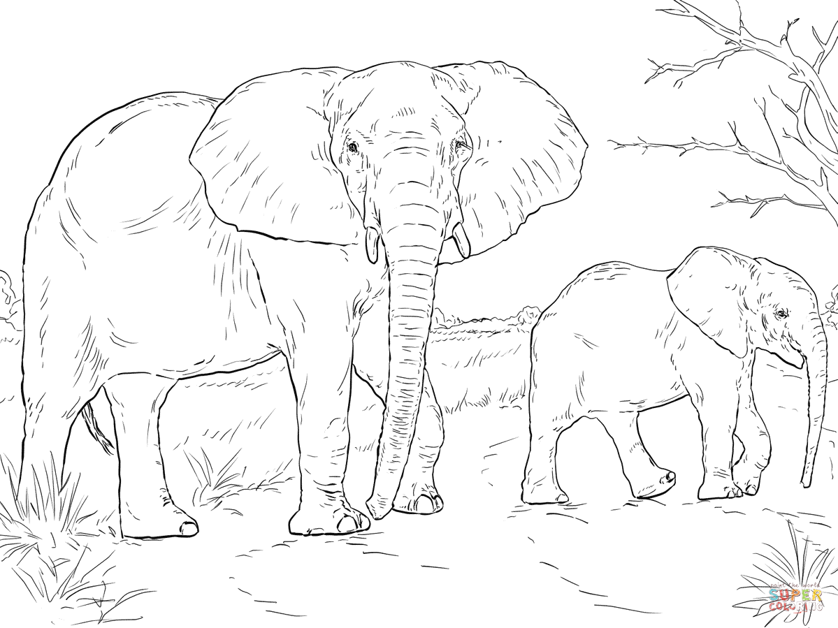 Indian Elephant Line Drawing At Getdrawings