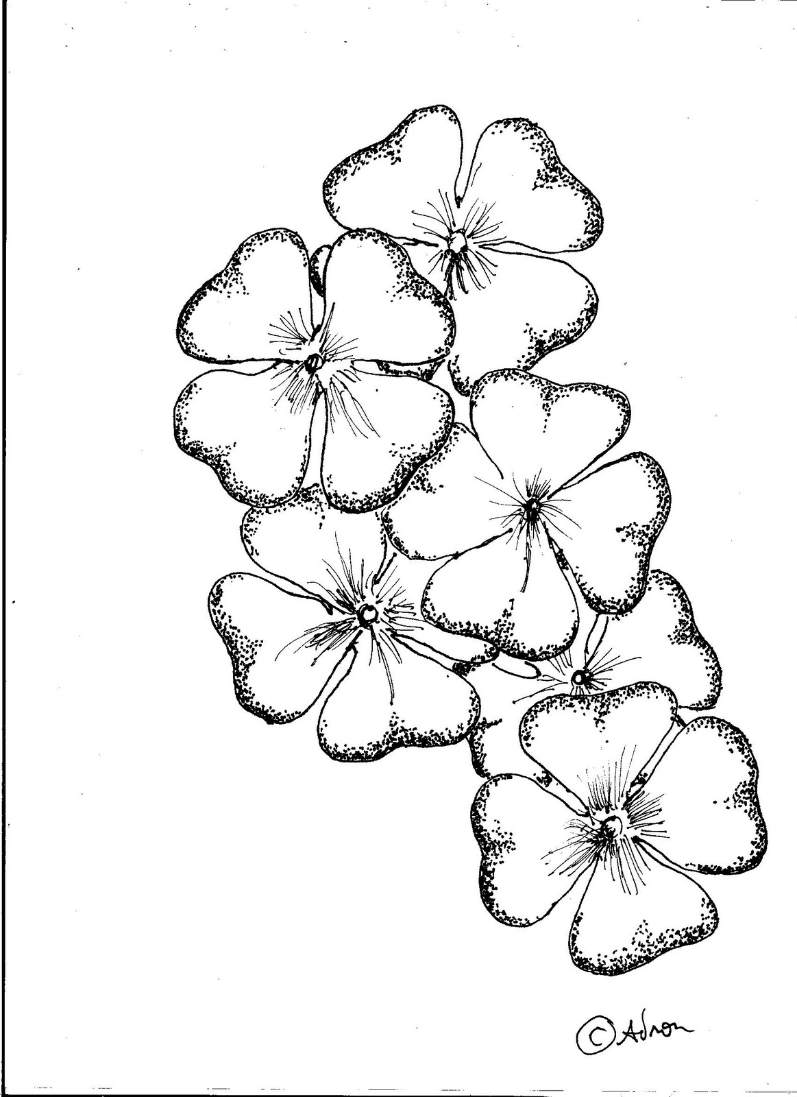 The Best Free Clover Drawing Images Download From 50 Free
