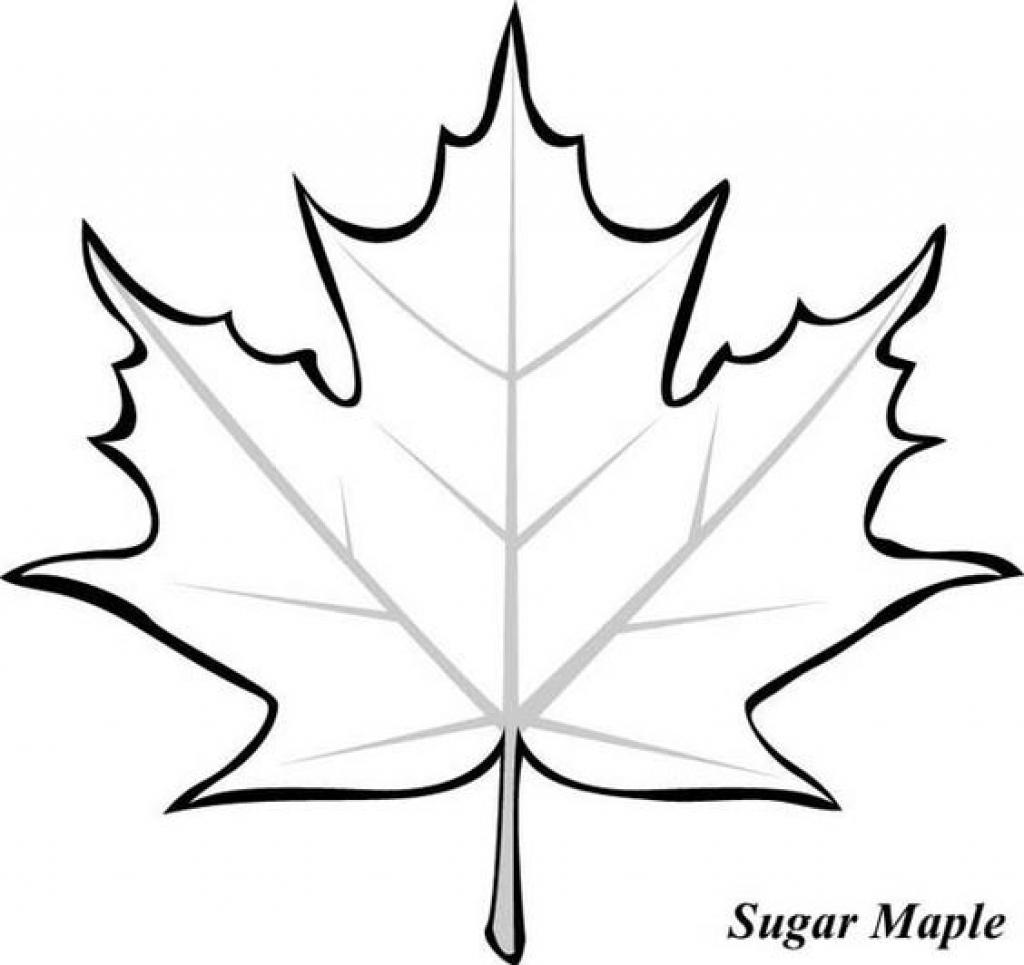 Japanese Maple Leaf Drawing At Getdrawings