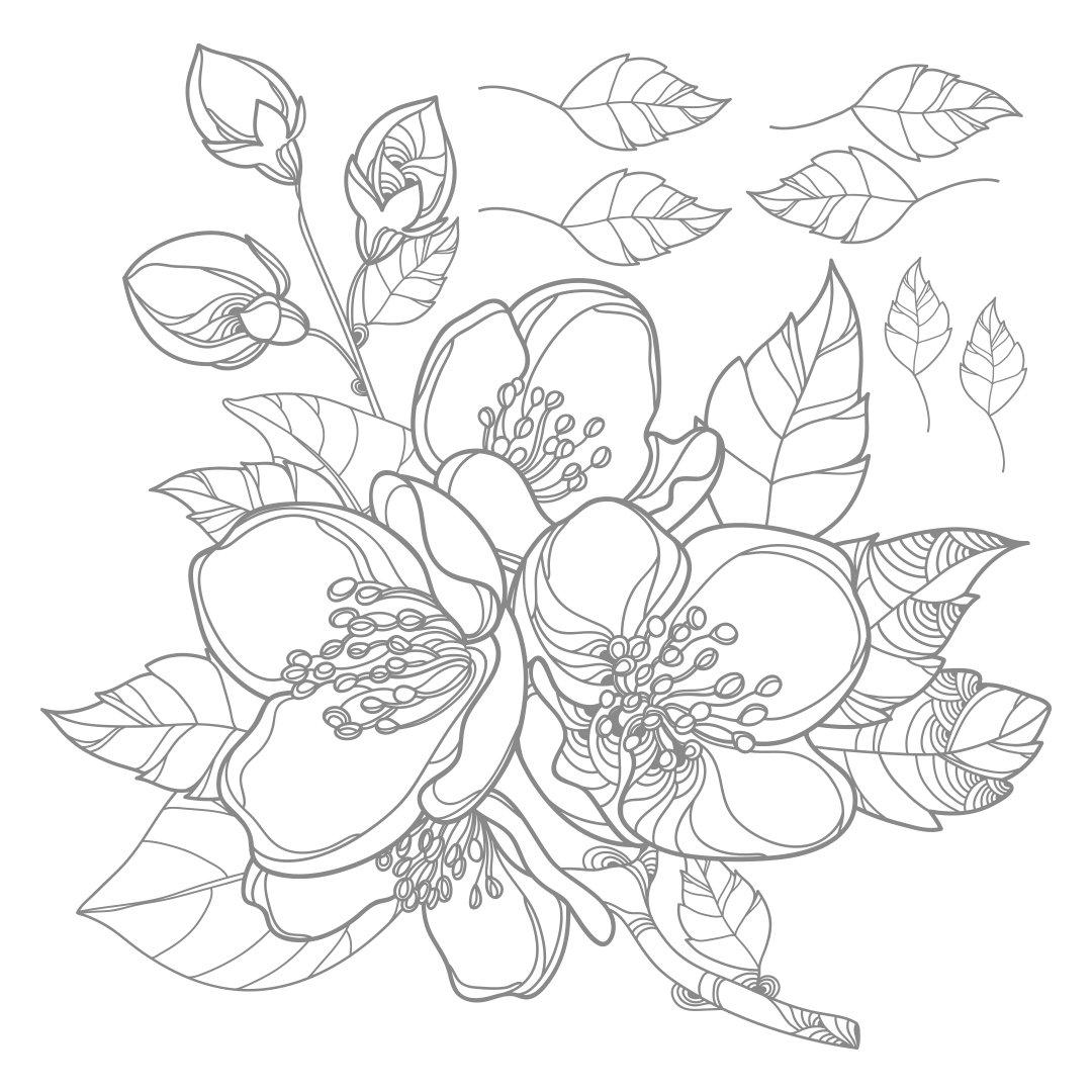 Jasmine Flower Drawing At Getdrawings