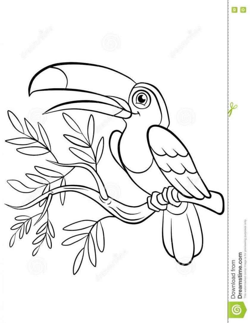 kiwi bird drawing at getdrawings  free download