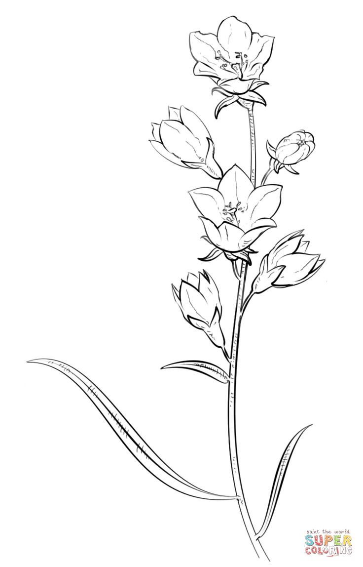Larkspur Drawing At Free For Personal
