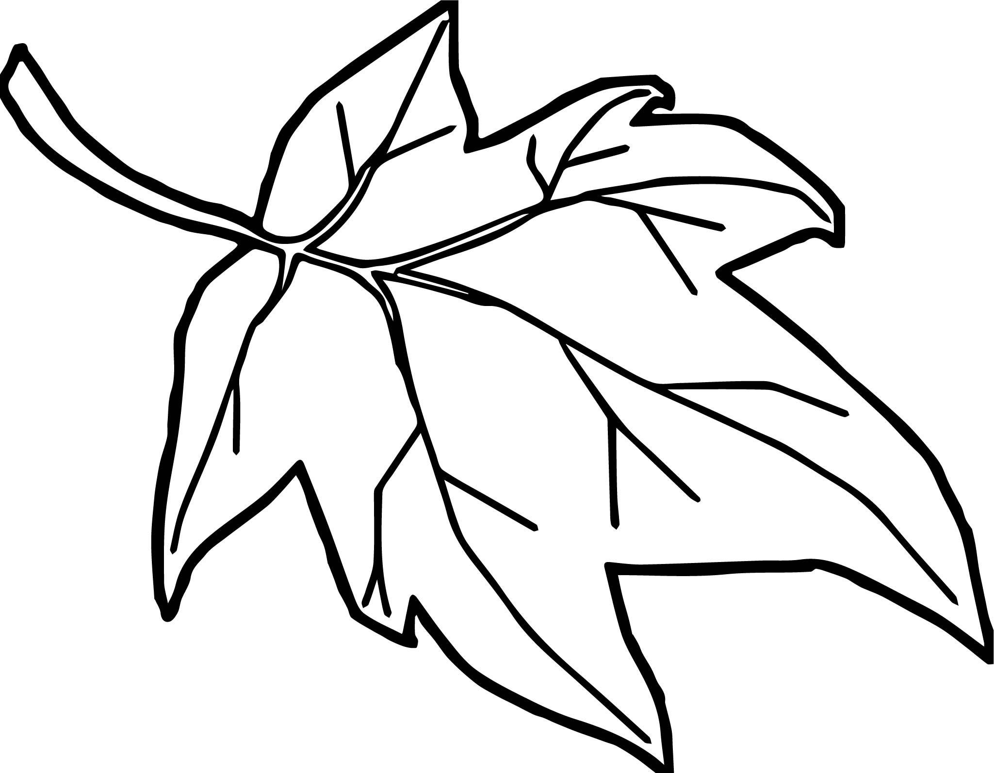 Leaf Cartoon Drawing At Getdrawings