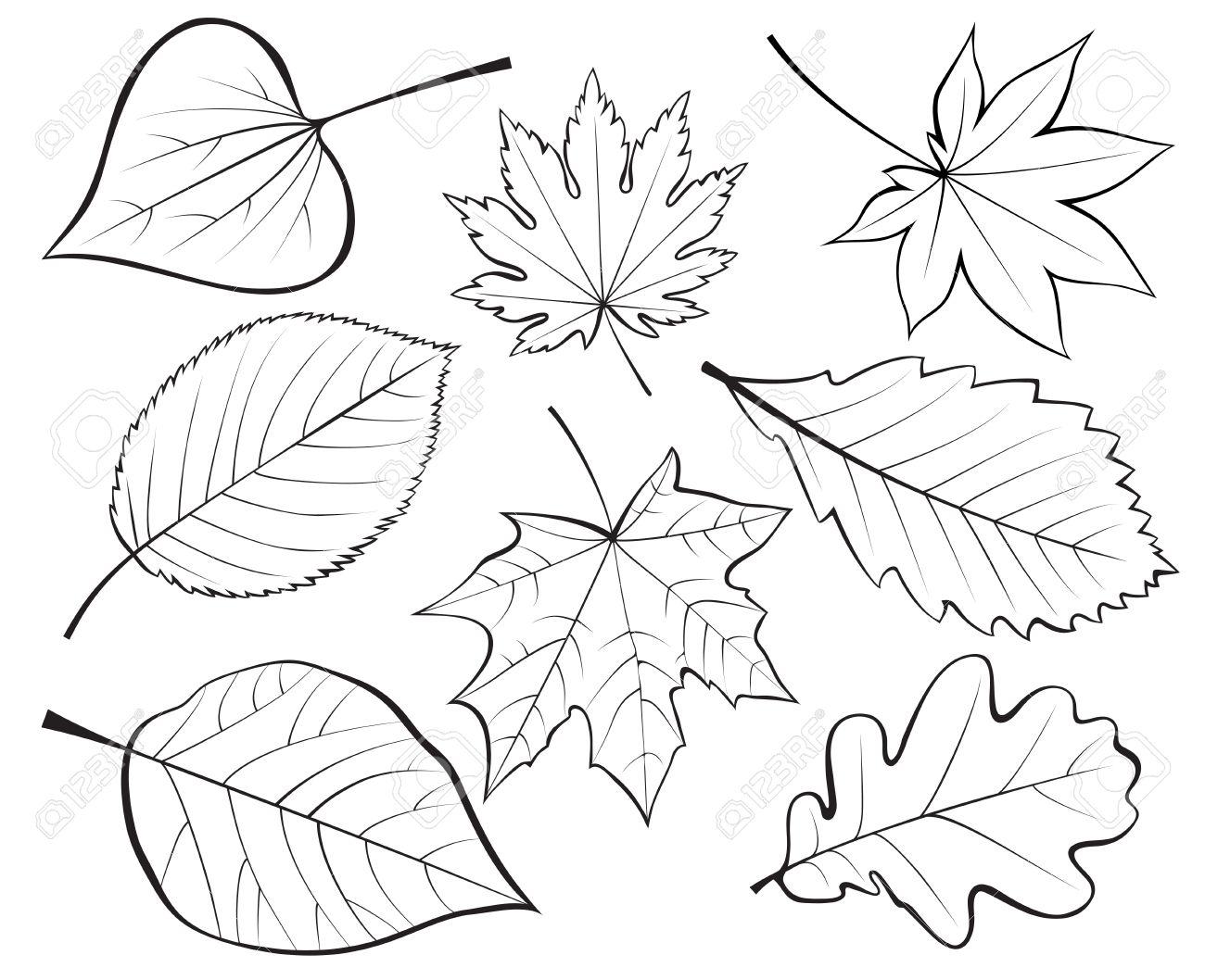Leaves Line Drawing At Getdrawings