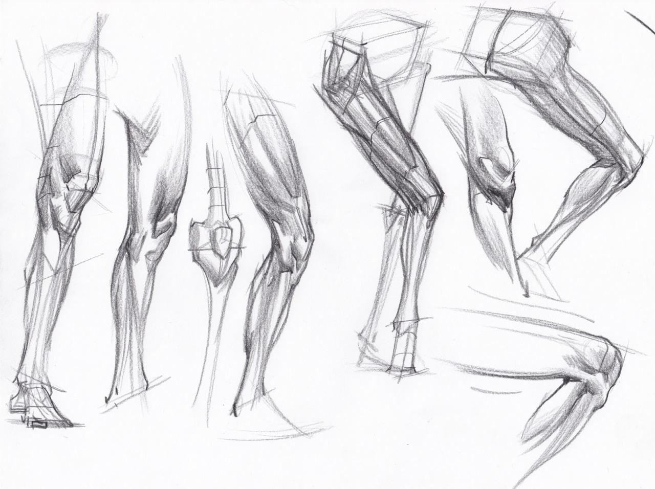 Leg Anatomy Drawing At Getdrawings