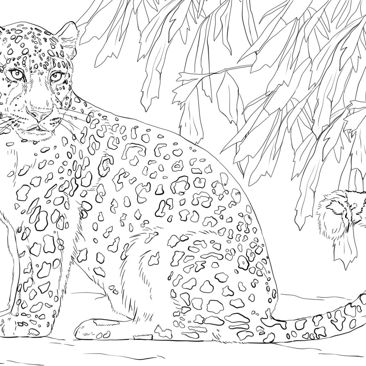 Leopard Line Drawing At Getdrawings