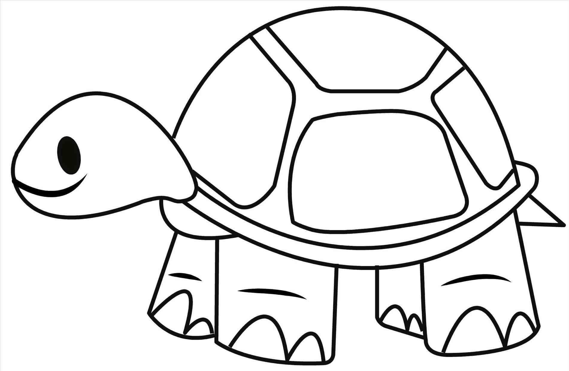 Line Drawing Turtle At Getdrawings