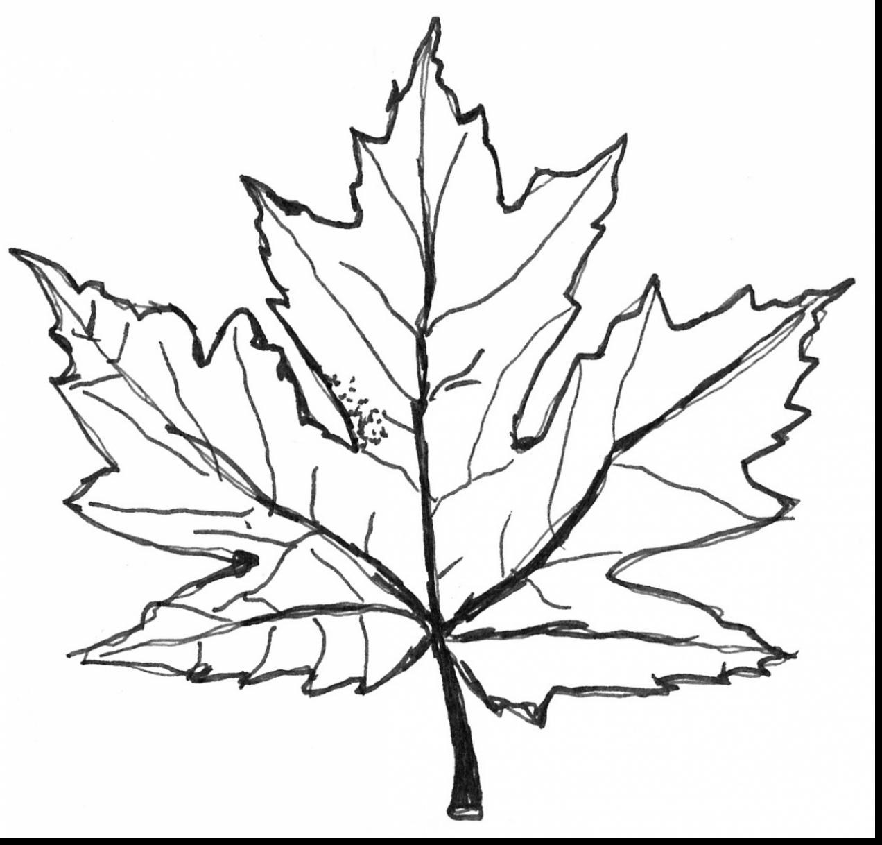 Maple Leaf Diagram