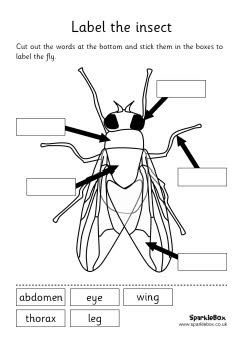 Labeled Ant Diagrams Head Or Body