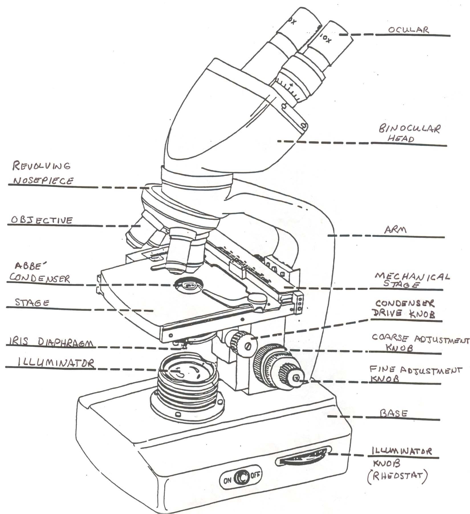 Microscope Drawing And Label At Getdrawings