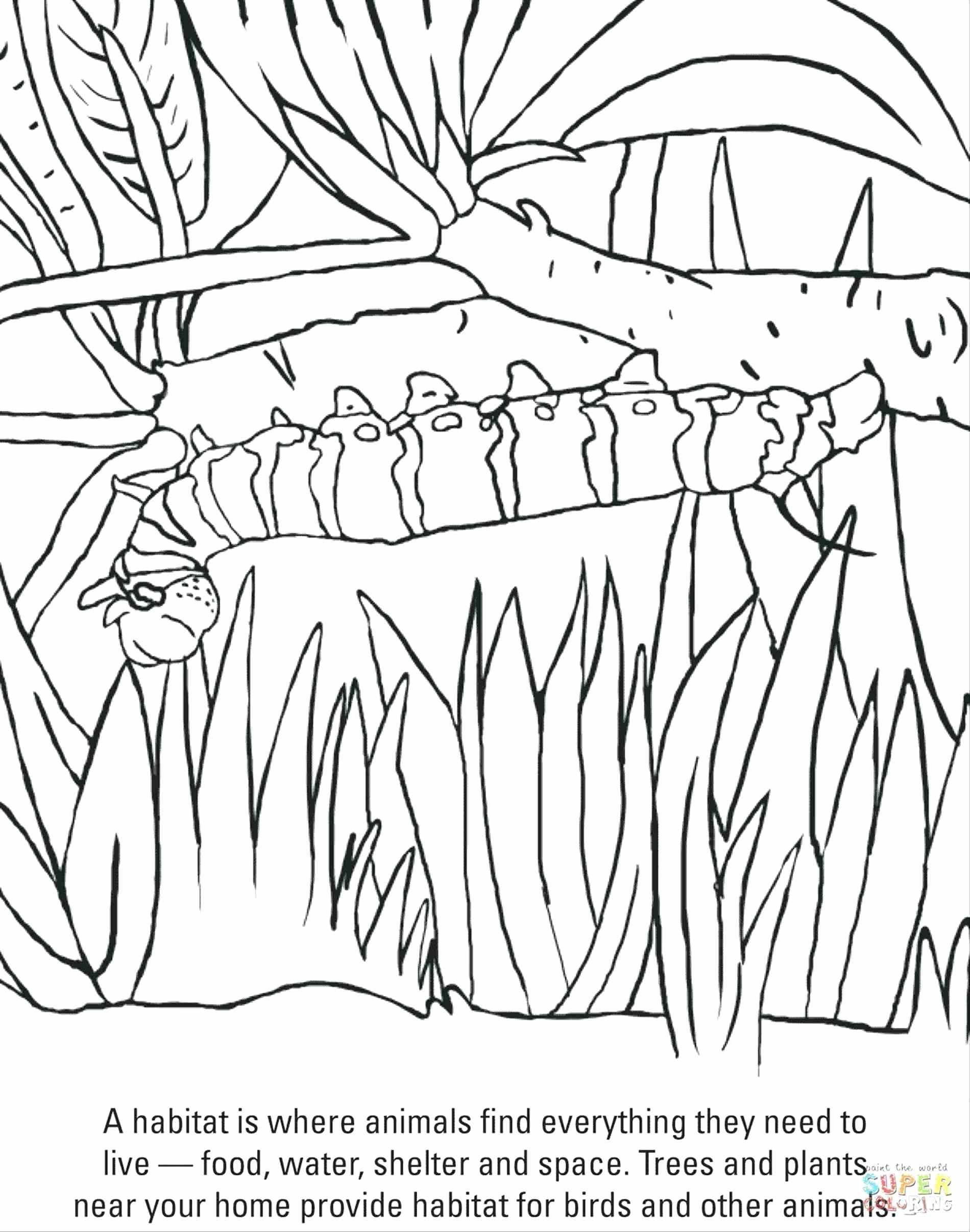 Monarch Caterpillar Drawing At Getdrawings
