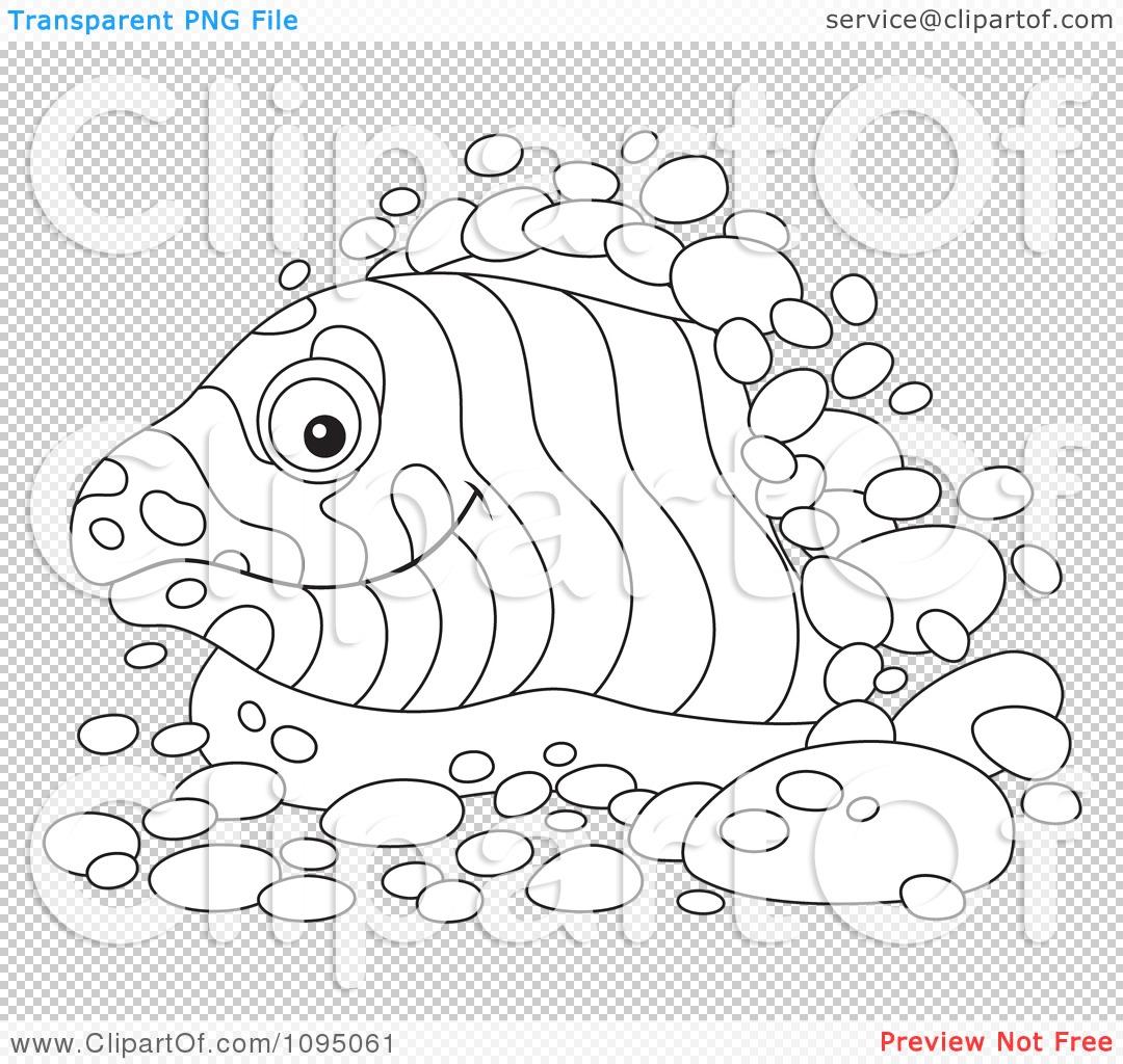 Moray Eel Drawing At Getdrawings