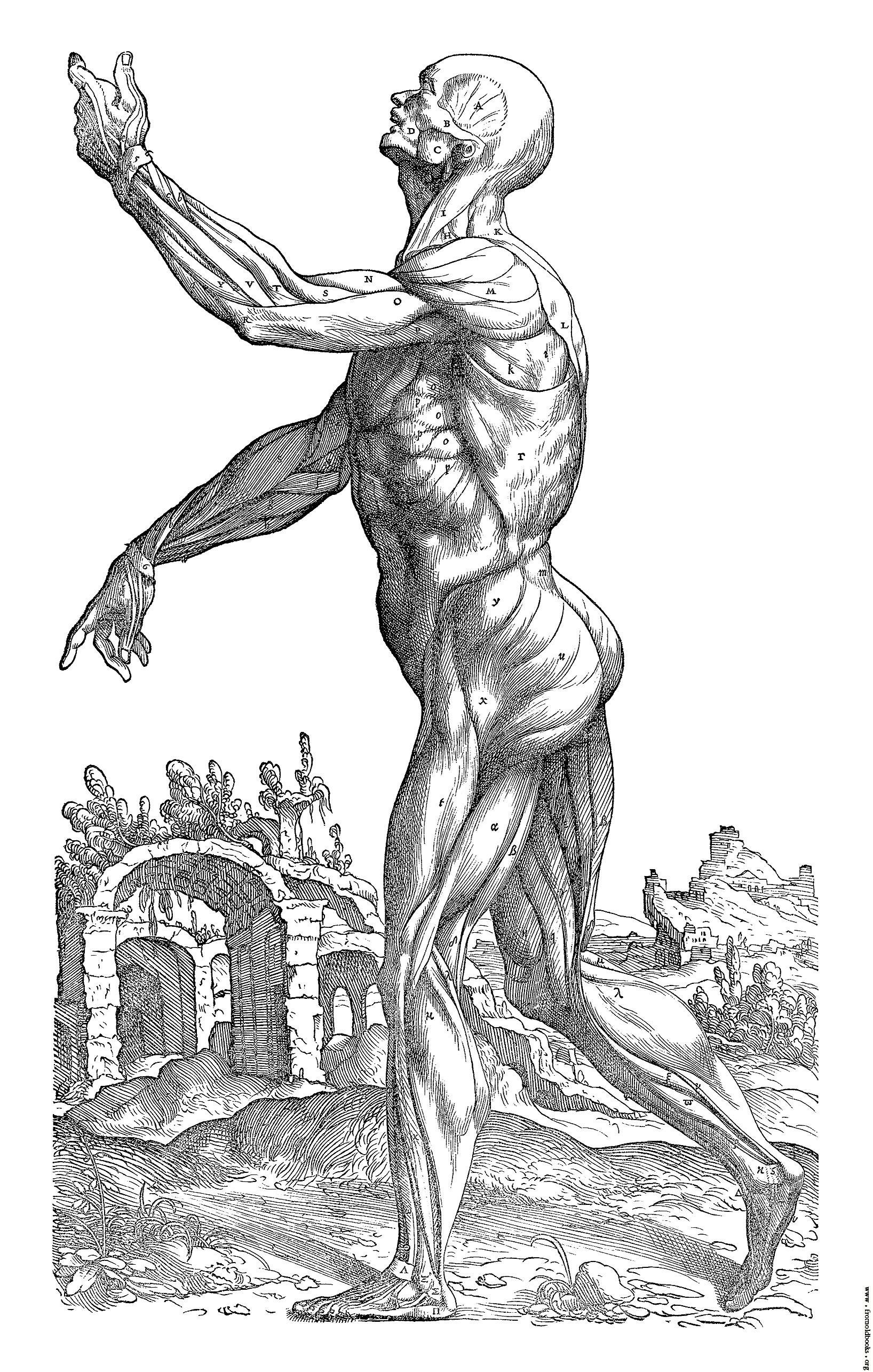 Muscle Man Drawing At Getdrawings