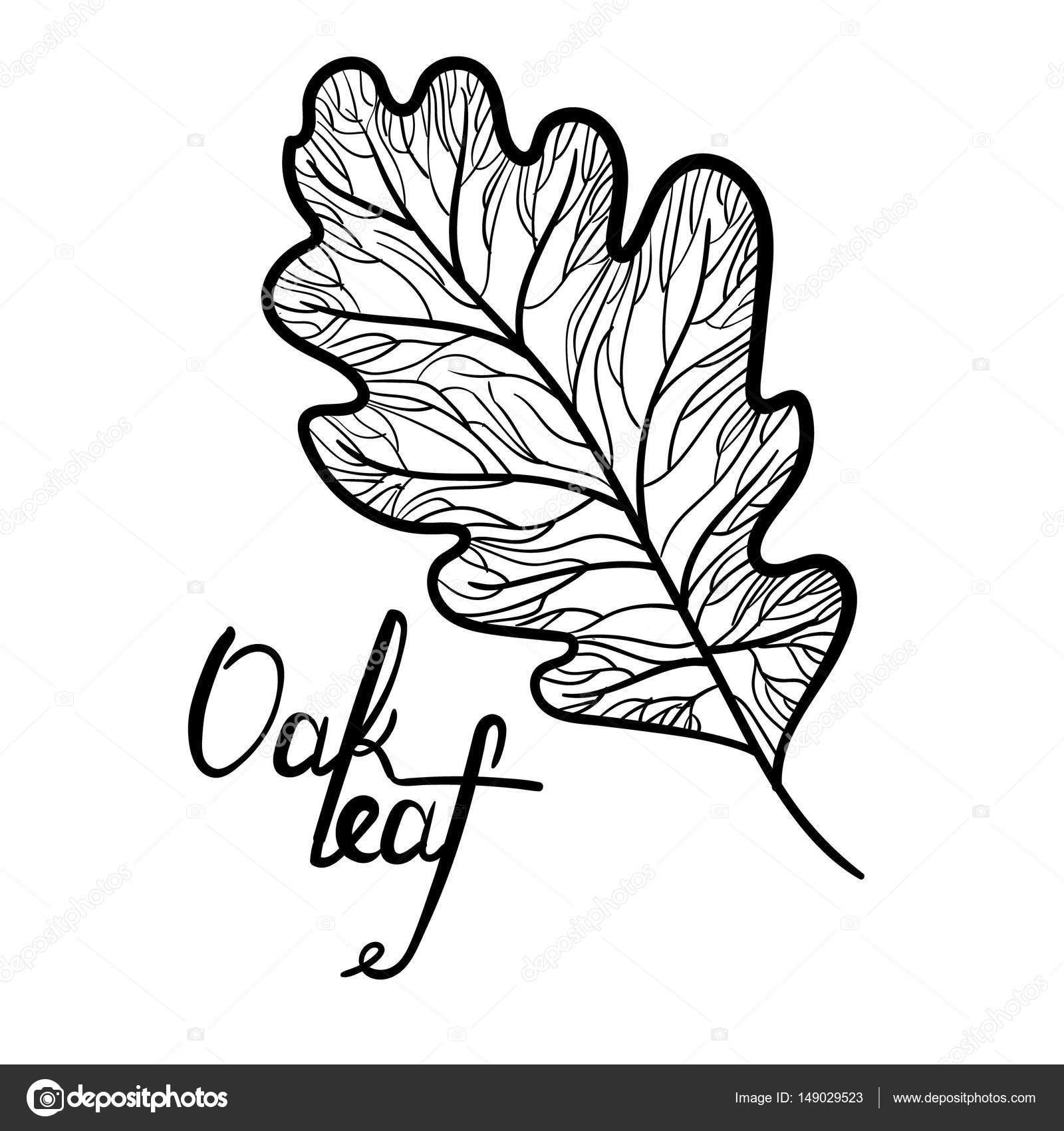 Oak Leaf Drawing At Getdrawings