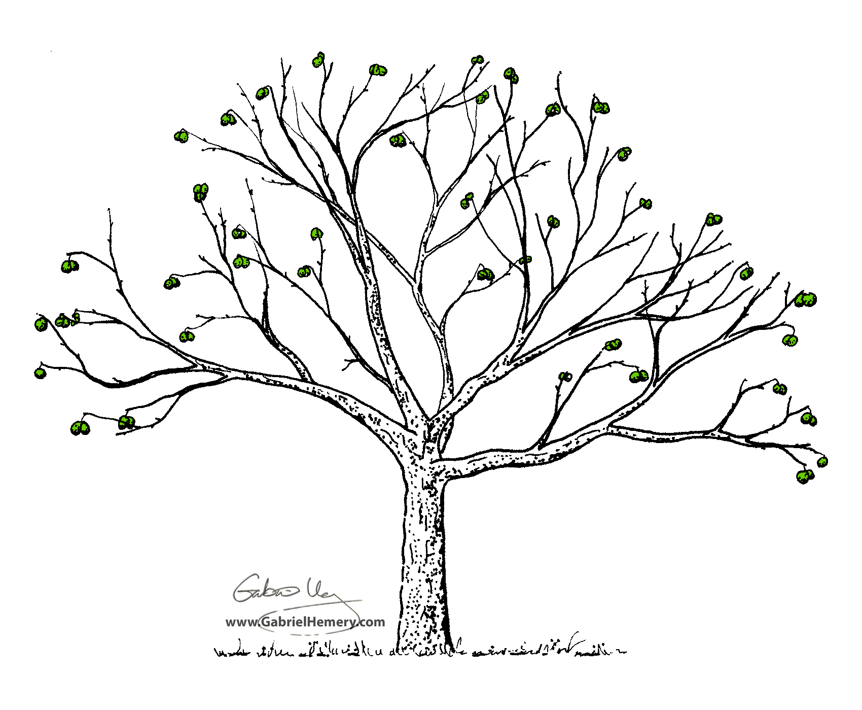 Oak Tree Drawing At Getdrawings