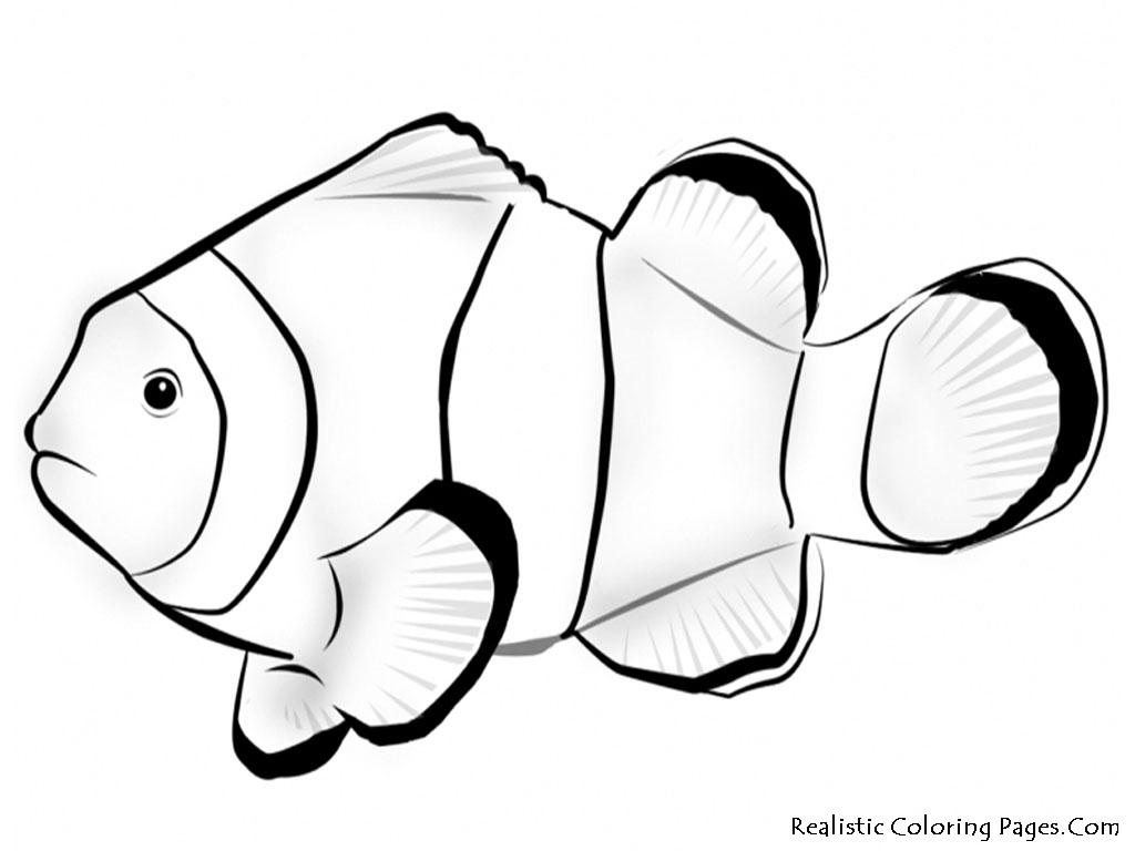 Ocean Fish Drawing At Getdrawings