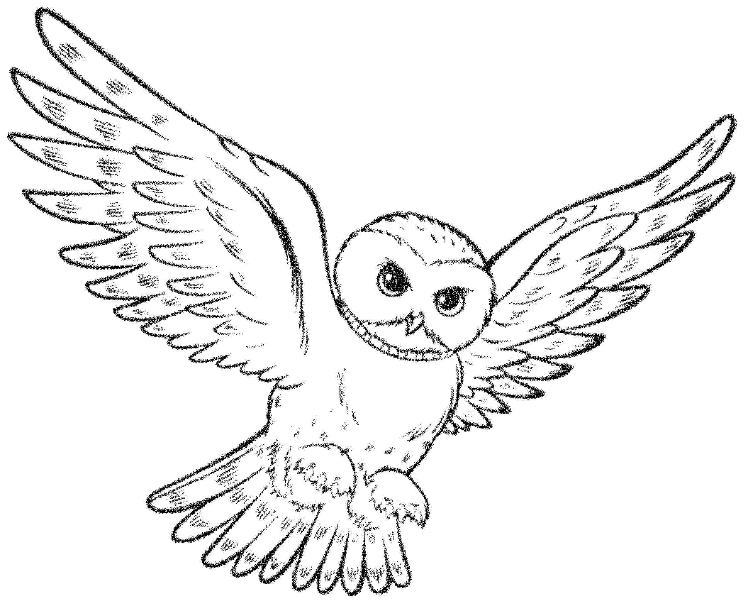 Owl Color Drawing At Getdrawings