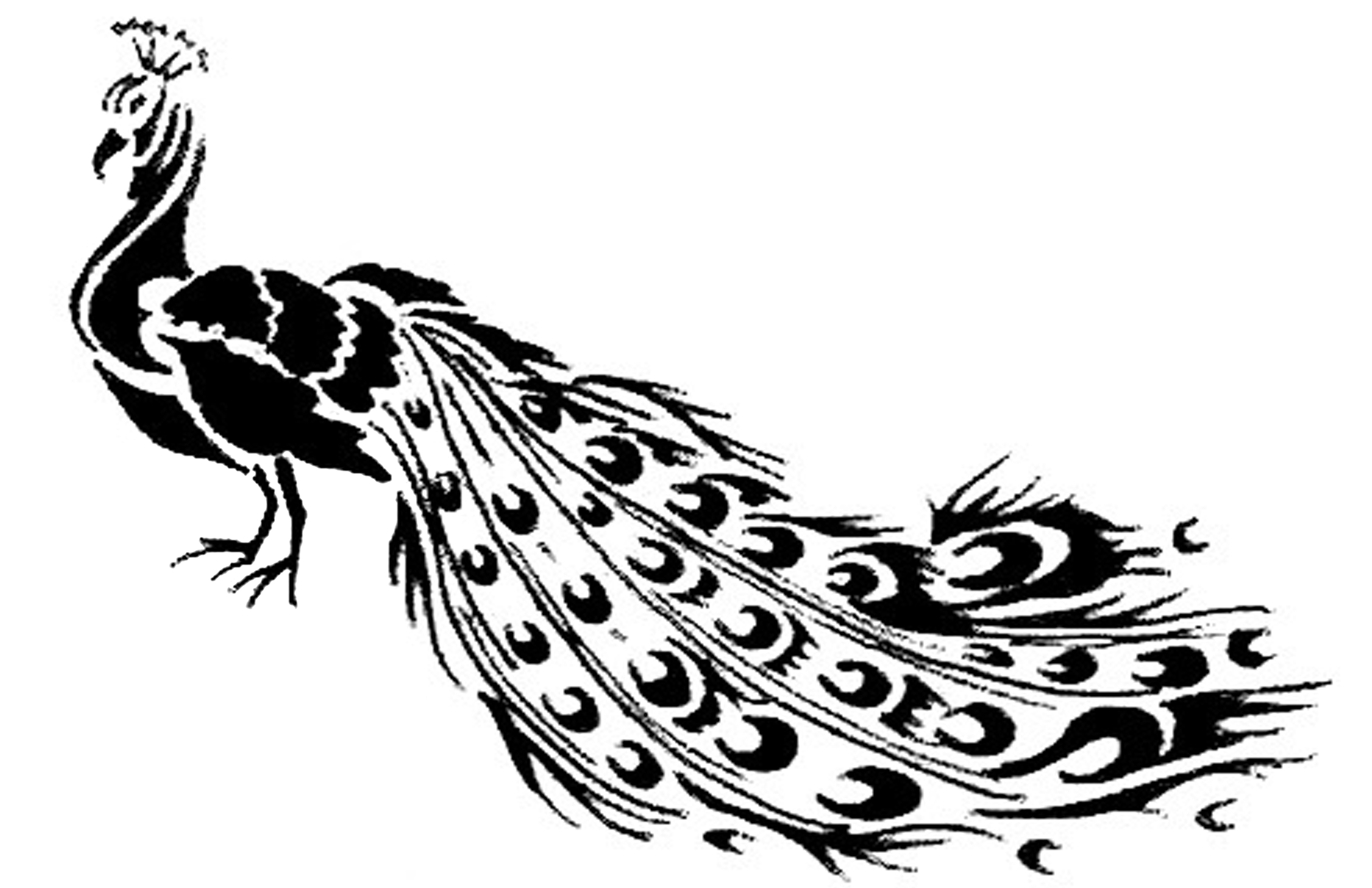 Peacock Black And White Drawing At Getdrawings