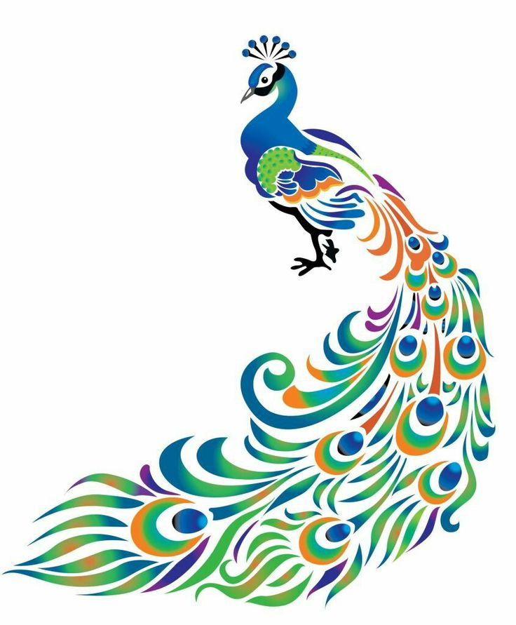 Peacock Drawing With Colour At Free For