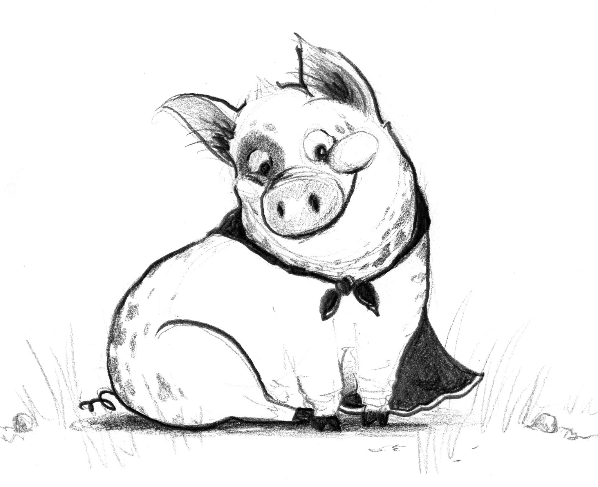 Pig Drawing At Getdrawings