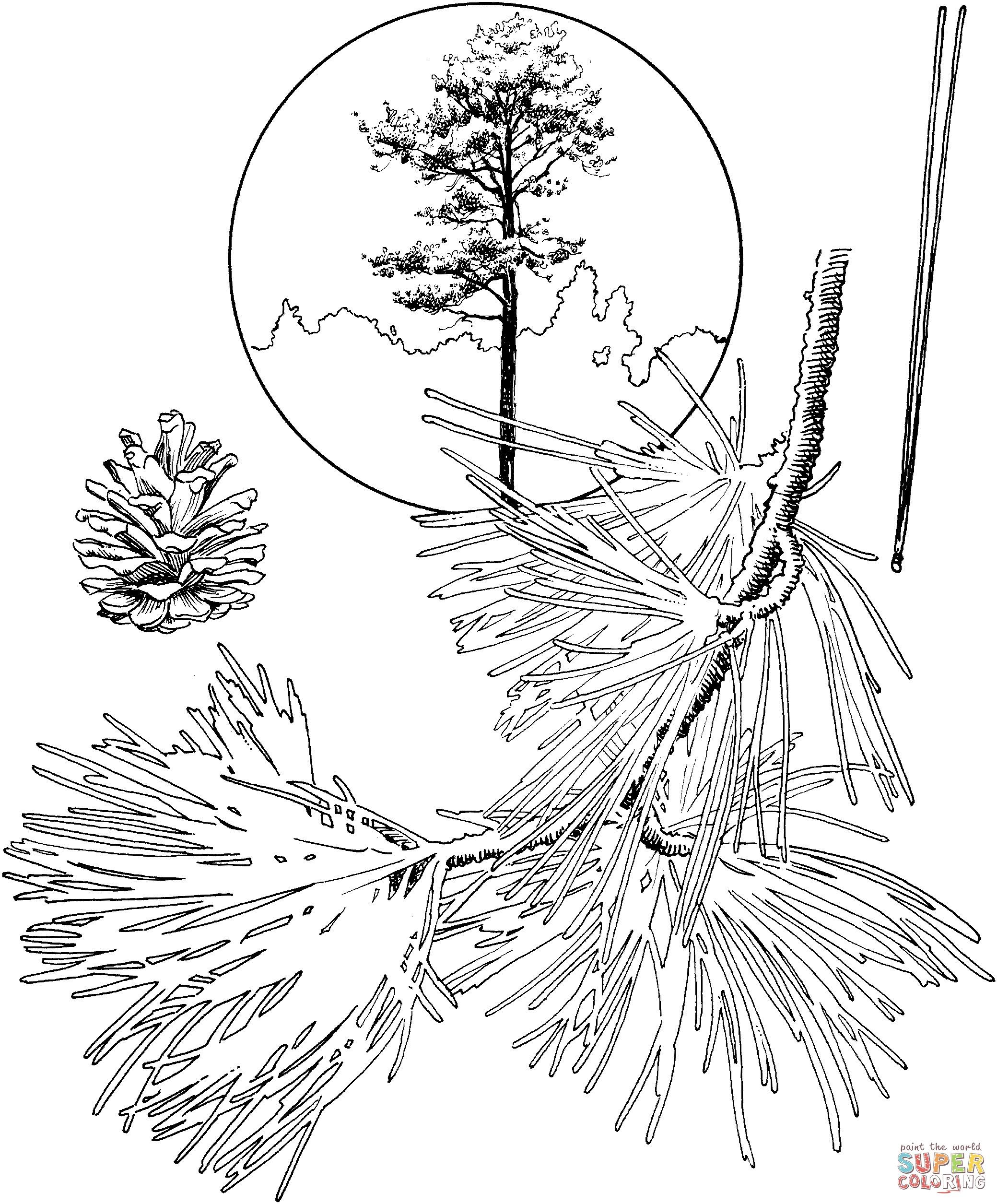 Pine Trees In Pencil Drawing At Getdrawings