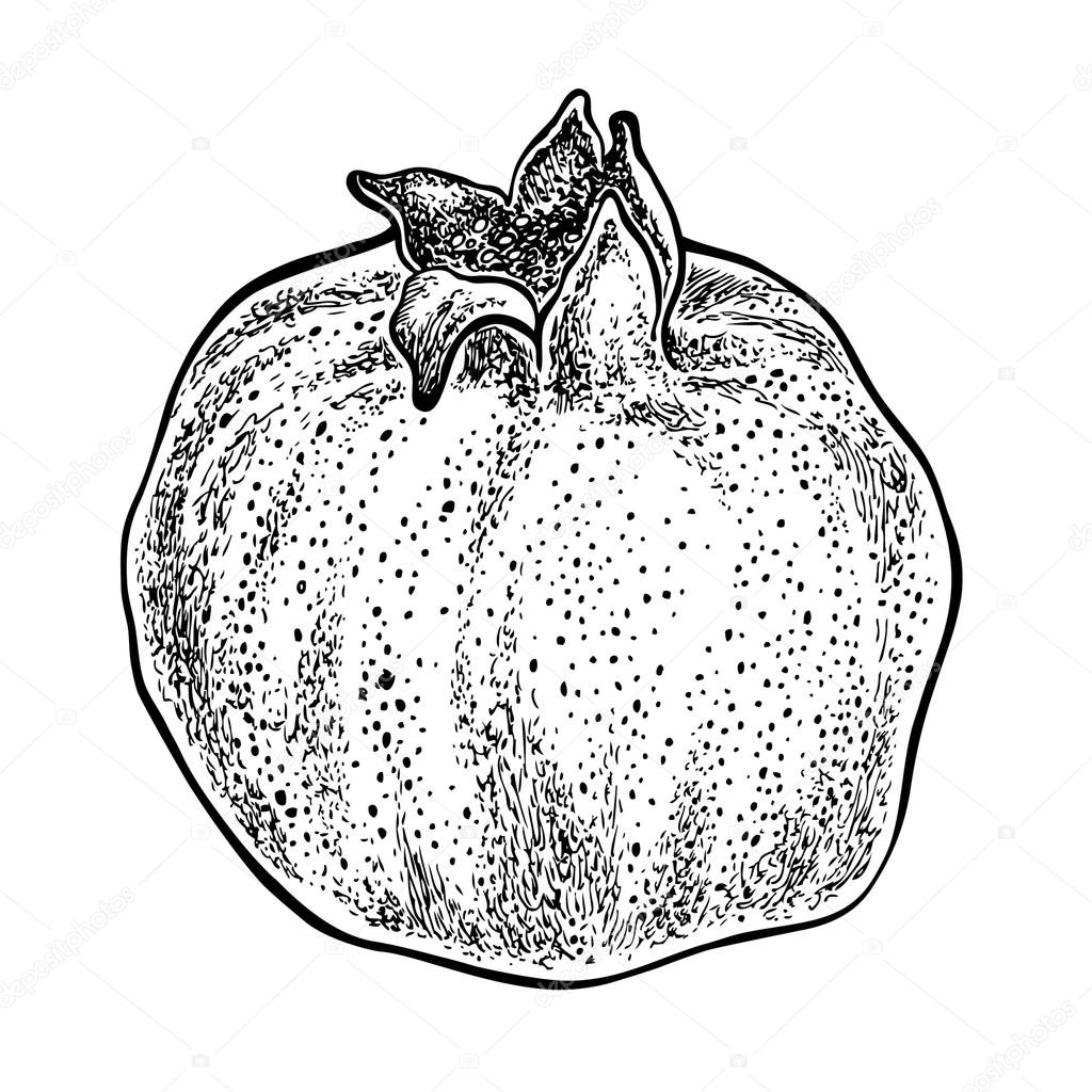 Pomegranate Drawing At Getdrawings