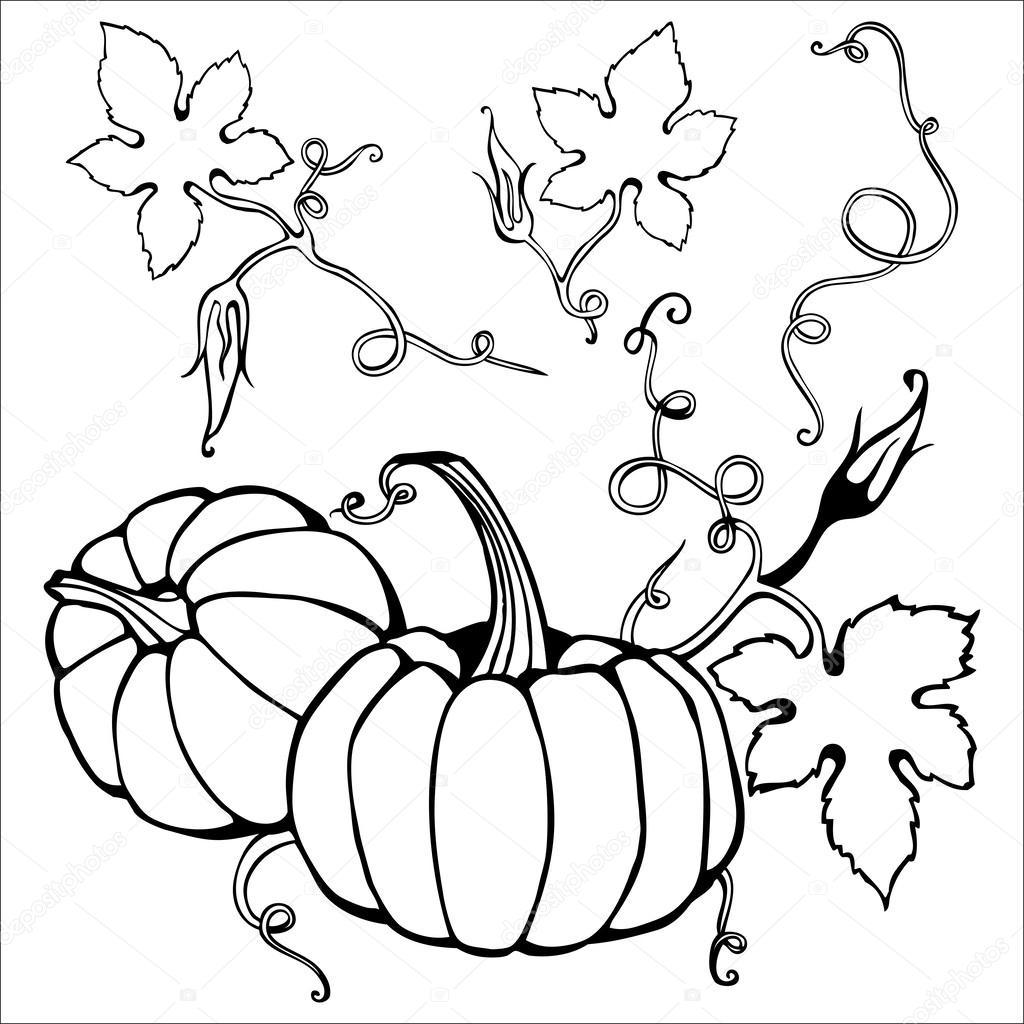 Pumpkin Plant Drawing At Getdrawings