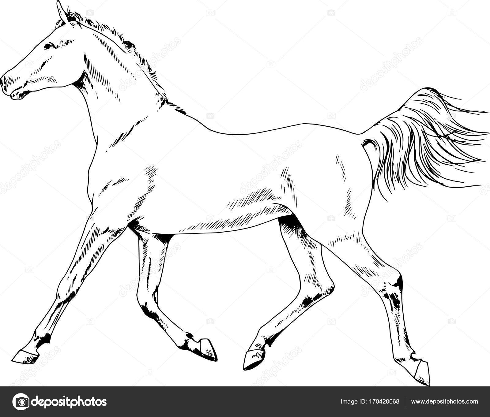 Racehorse Drawing At Getdrawings