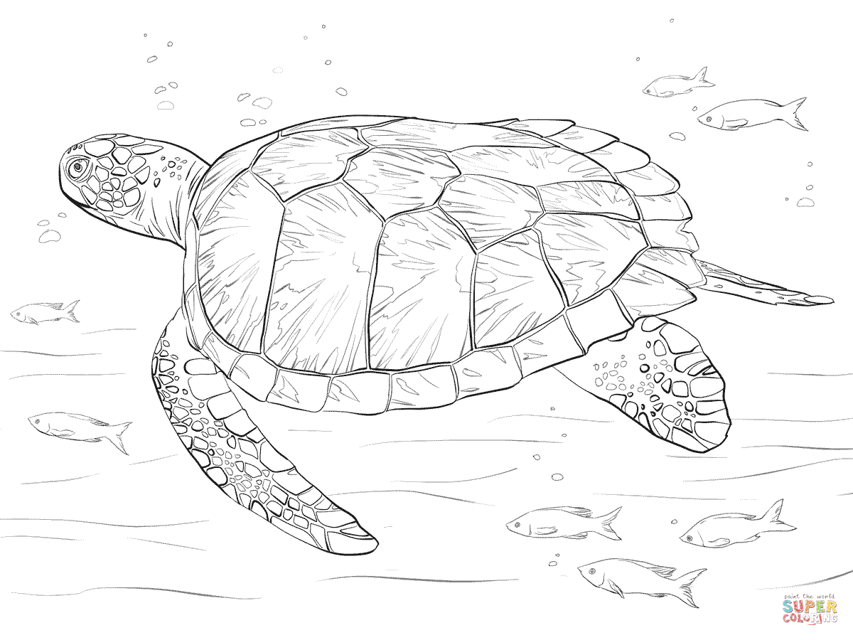 Realistic Sea Turtle Drawing At Getdrawings