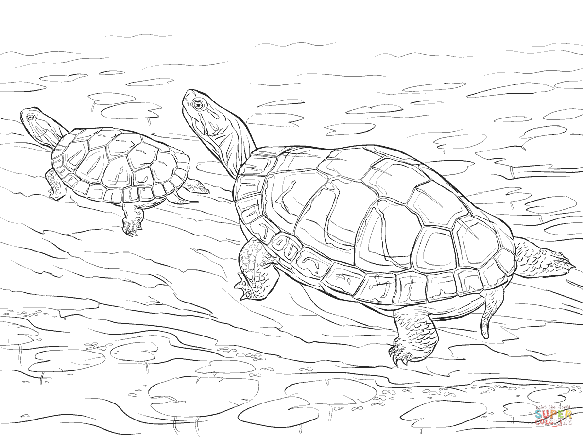Realistic Turtle Drawing At Getdrawings