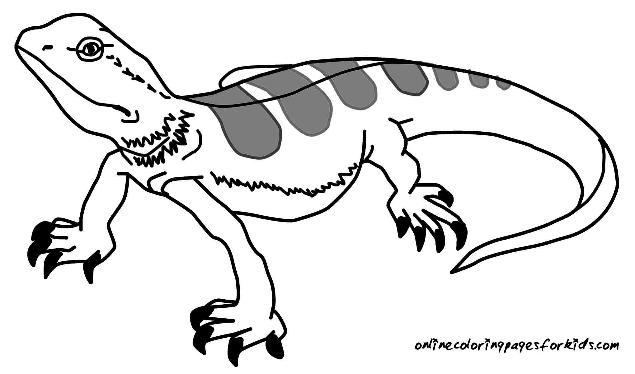 Reptile Drawing At Getdrawings