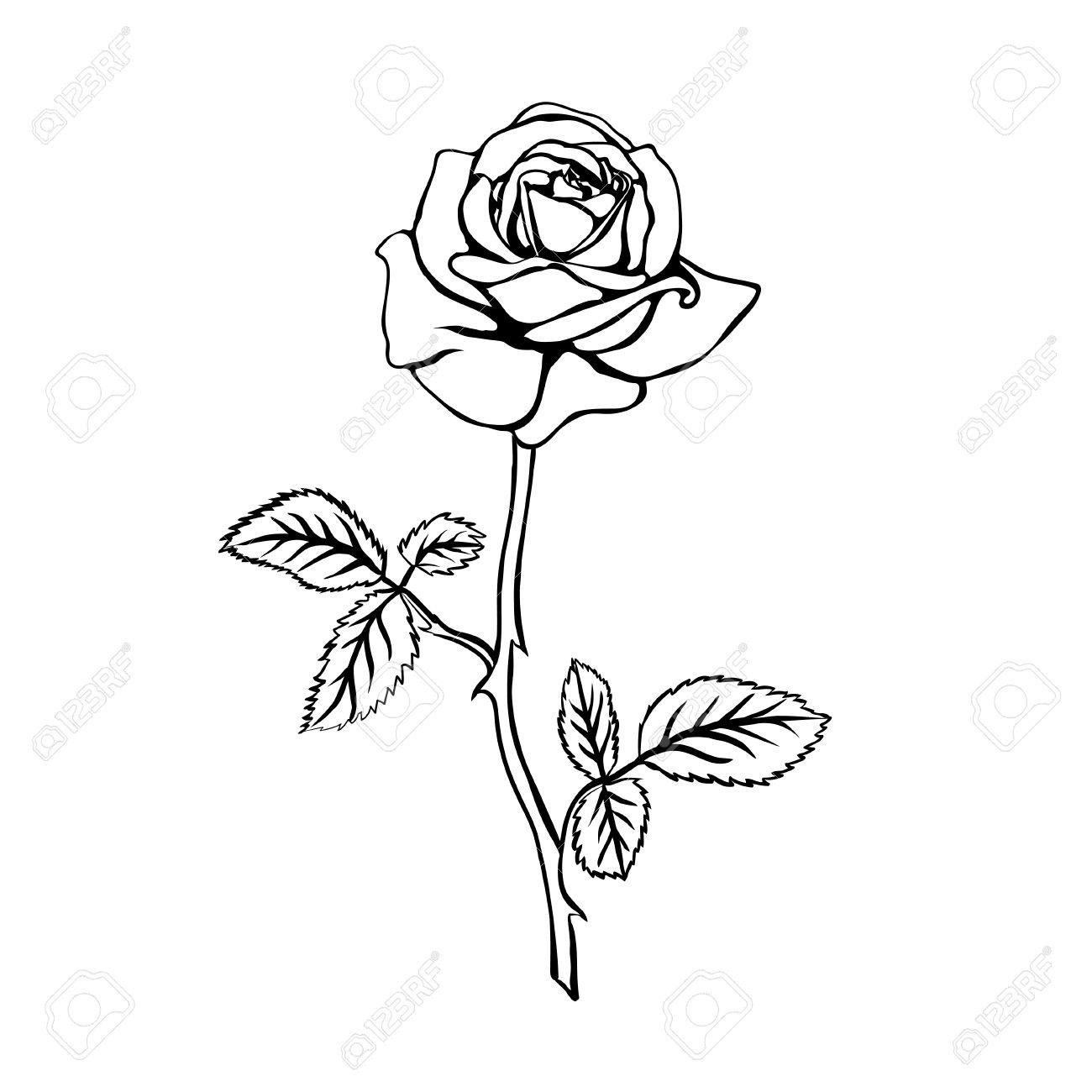 Long Stem Rose Tattoo Realistic