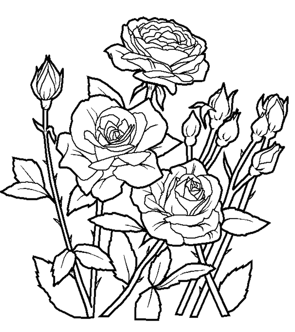 Rose Garden Drawing At Getdrawings