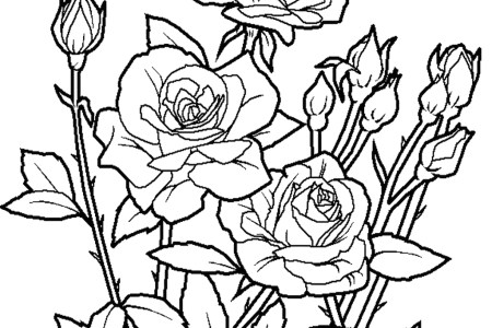 Rose Flower Coloring Pages Kcentar Packed With Page Of Roses Nice