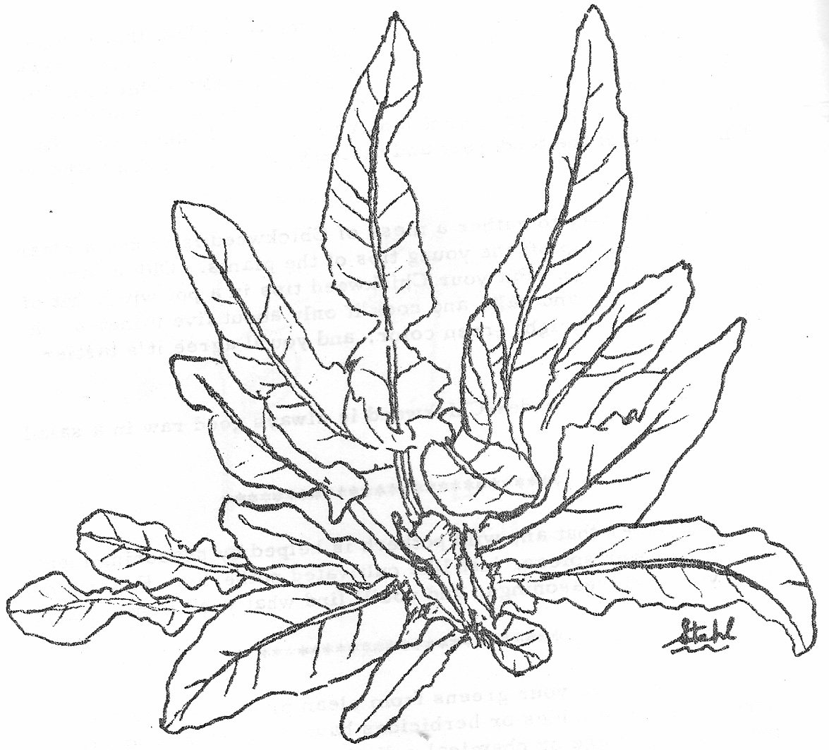 Sea Plants Drawing At Getdrawings