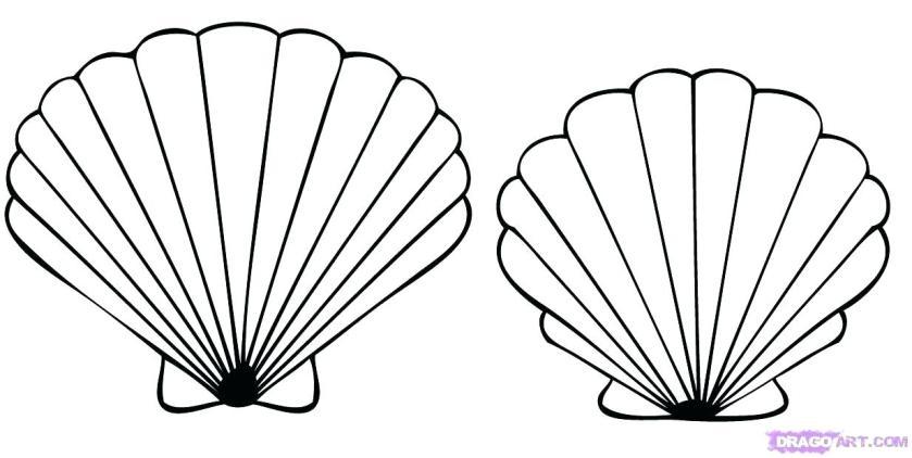 sea shell drawing at getdrawings  free download