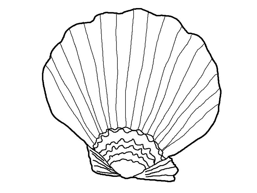 Sea Shells Drawing At Getdrawings