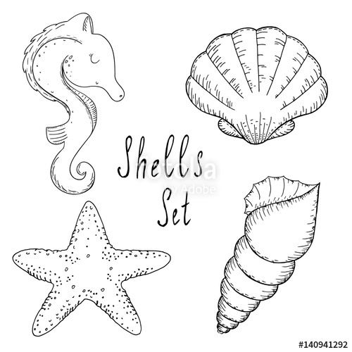 Sea Shells Drawing At Free For Personal