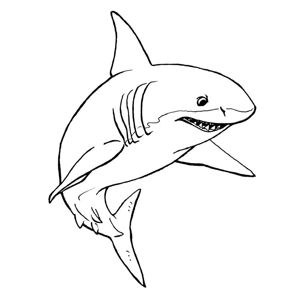 Shark Line Drawing At Getdrawings