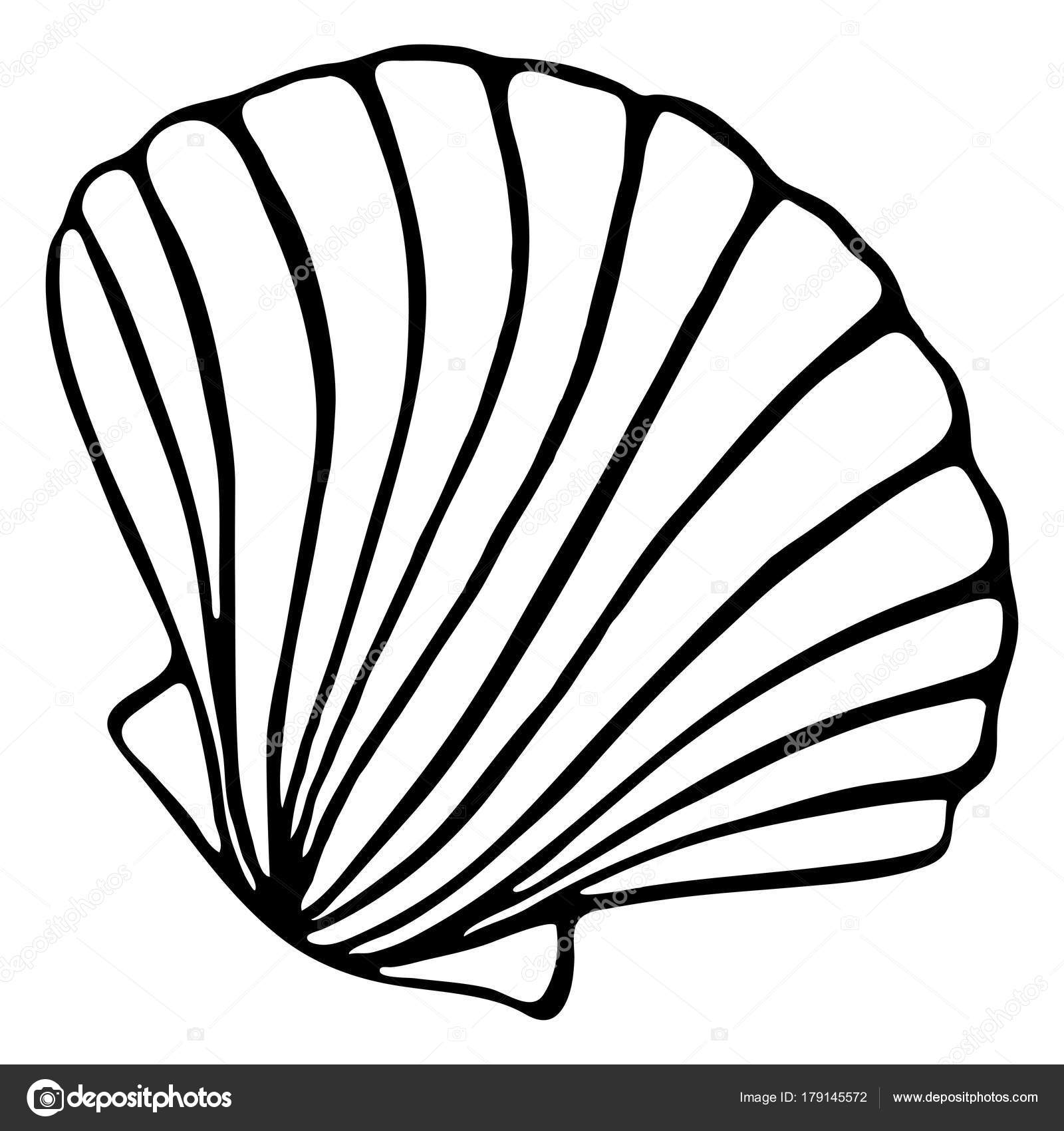 Shell Drawing At Getdrawings