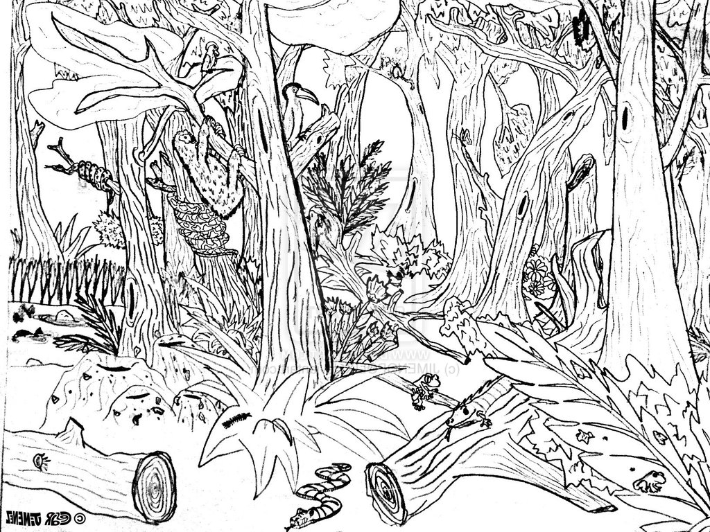 Simple Forest Drawing With Animals At Getdrawings