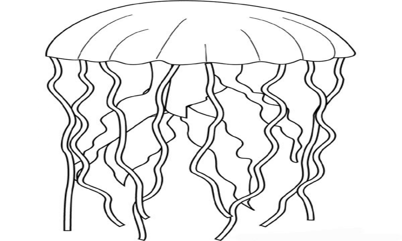 Simple Jellyfish Drawing At Getdrawings
